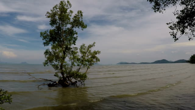 mangrove forests, phuket, thailand - tide stock videos & royalty-free footage