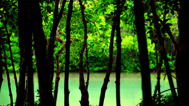Mangrove Forests.
