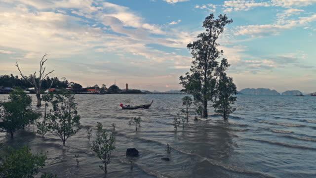 mangrove habitat, old town, ko lanta, thailand at dusk - five animals stock videos & royalty-free footage
