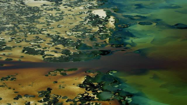 vídeos de stock, filmes e b-roll de mangrove petenes in coastal mexico - yucatán