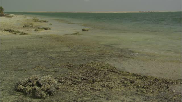Mangrove Reserve, wetlands scenic, wide shot, Abu Dhabi, United Arab Emirates