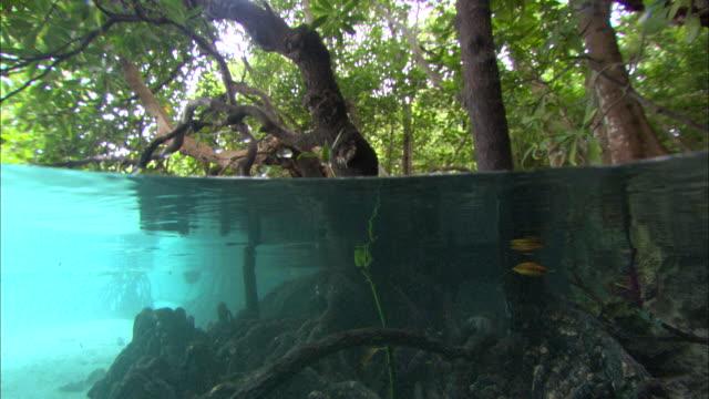 mangrove, scenic, split screen, trees to underwater, aldabra, indian ocean  - mangrove tree stock videos & royalty-free footage