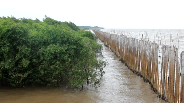 mangrove tree against the wind and bamboo wood wall - mangrove tree stock videos & royalty-free footage