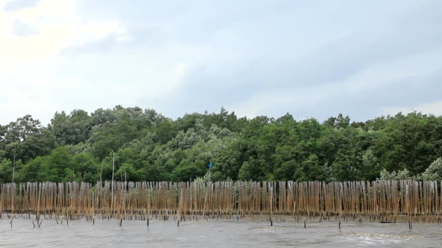 mangrove tree against the wind and bamboo wood wall - mangrove forest stock videos & royalty-free footage