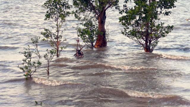 mangrove tree habitat close-up, natures carbon capture machines - five animals stock videos & royalty-free footage