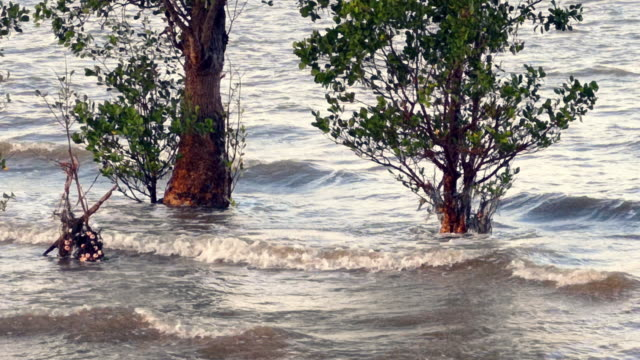 mangrove tree habitat extreme close-up, natures carbon capture machines - five animals stock videos & royalty-free footage