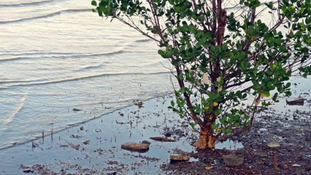 mangrove tree habitat, natures carbon capture machines - five animals stock videos & royalty-free footage