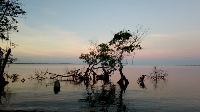 vídeos y material grabado en eventos de stock de mangrove trees are surrounded by ocean water on october 22, 2019 in key largo, florida. as king tide level water floods residential streets it is... - marea