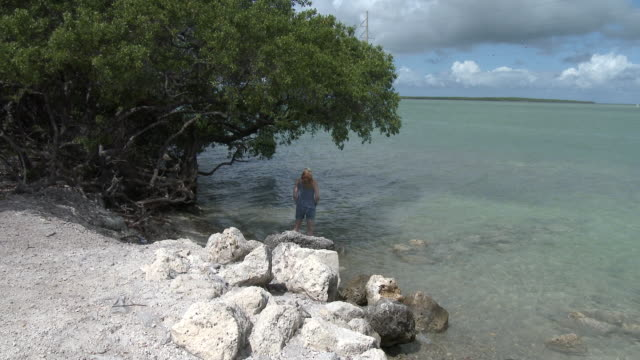 mangrove trees, florida keys turquoise & blue waters, shoreline - the florida keys stock videos & royalty-free footage