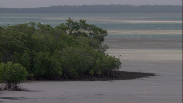 mangrove trees grow on a beach near queensland, australia. available in hd. - mangrove tree stock videos & royalty-free footage