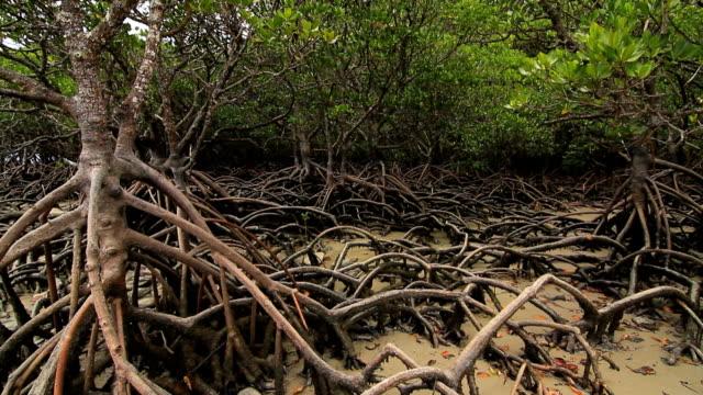 mangrove - mangrove tree stock videos & royalty-free footage
