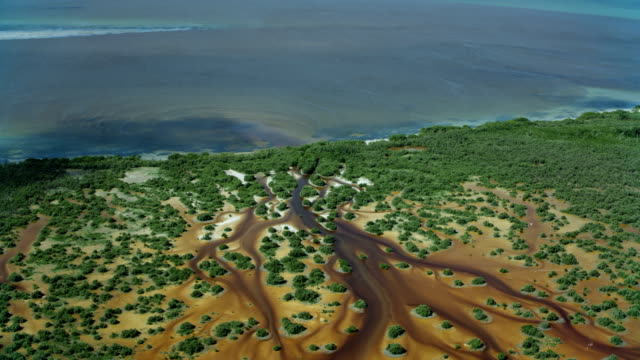 mangrove wetlands on mexican coast - mangrove forest stock videos & royalty-free footage