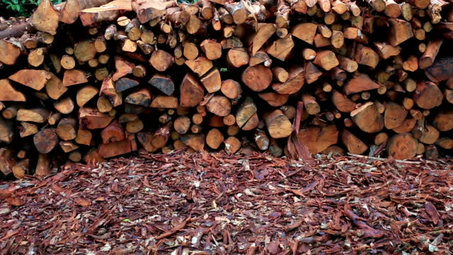 mangrove wood to be processed as charcoal - timber stock videos and b-roll footage