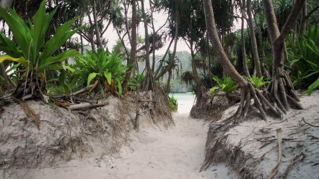 vidéos et rushes de ws mangroves and foliage on the almost enclosed beach of maya bay on koh phi phi leh (or koy phi phi leh) - maya