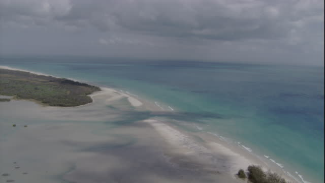 Mangroves grow along Queensland's sandy coast. Available in HD.