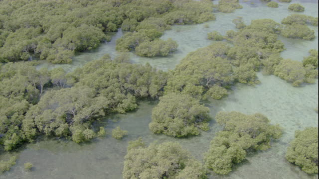 mangroves grow in shallow waters along queensland's coast. available in hd. - shallow stock videos & royalty-free footage