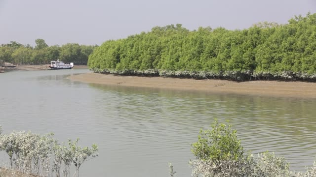 mangroves in the sunderbans ganges delta india the area is very low lying and vulnerable to sea level rise high tide mark can clearly be seen on the... - tropical tree stock videos & royalty-free footage