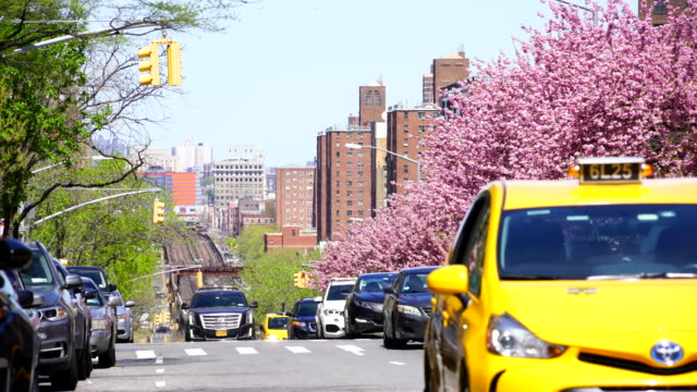 manhattan traffic goes through along the full-blossomed rows of cherry blossom trees at park avenue in manhattan new york city. mta long island railroad tracks and trains can be seen in far back distance. - long island railroad stock videos and b-roll footage