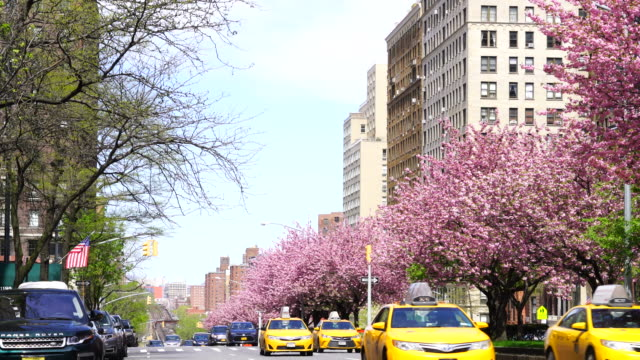 manhattan traffic goes through along the full-blossomed rows of cherry blossom trees at park avenue in manhattan new york city. mta long island railroad tracks and trains can be seen in far back distance. - long island railroad stock videos & royalty-free footage