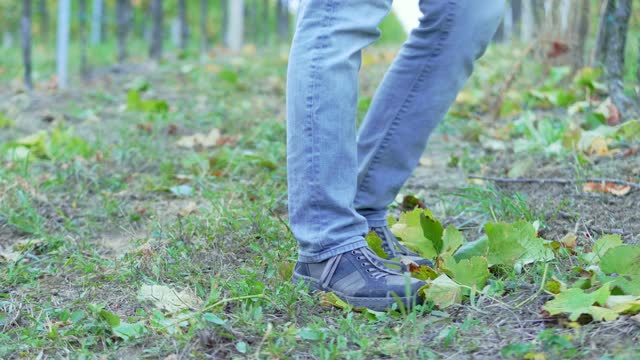 man's feet walking towards the camera over growing grapes rows in vineyard, staying and continue moving, dusk light, wide shot, focus on grape leaf and legs - grape leaf stock videos & royalty-free footage