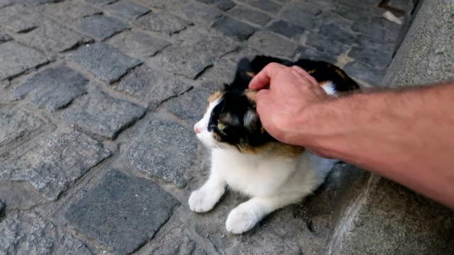 男の手は、通りの歩道の上の猫を愛撫します。白、黒、黄色、緑の目の上に置く - ショートヘア種の猫点の映像素材/bロール