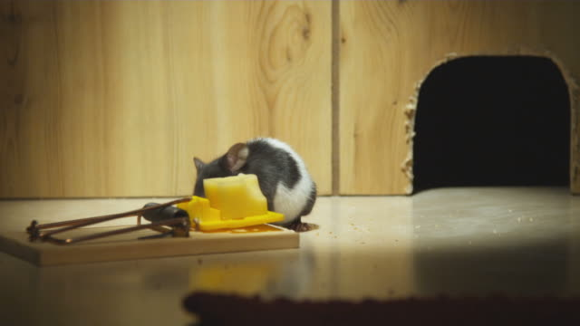 ms, man's hand pulling mouse into mouse hole, mouse trap in foreground - hole stock videos and b-roll footage