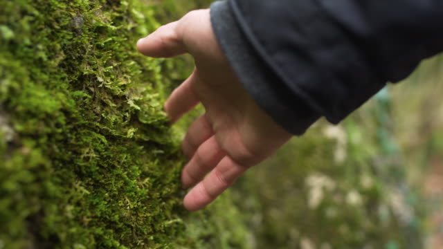 CU man's hand touching moss at forest