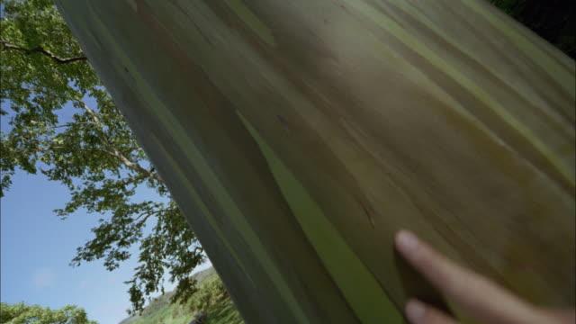 cu, td, la, man's hand touching tree trunk, maui, hawaii, usa - menschlicher finger stock-videos und b-roll-filmmaterial