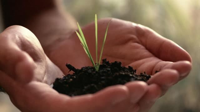 vídeos y material grabado en eventos de stock de cu, selective focus, man's hands holding seedling - manos ahuecadas