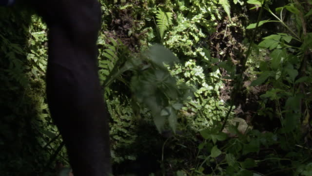 man's legs walk through rainforest, west papua, indonesia - barefoot点の映像素材/bロール