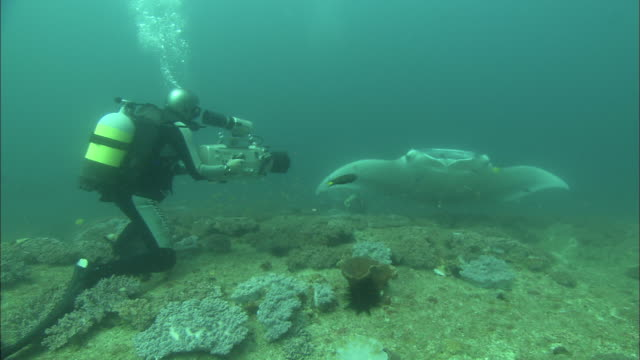 manta, cameraman films, dna sample, mozambique  - wildlife tracking tag stock videos and b-roll footage