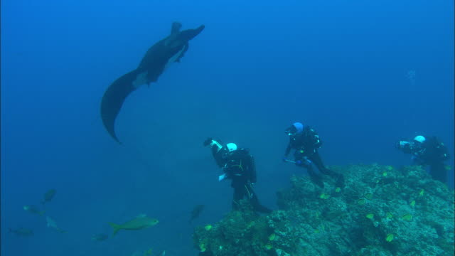 manta, flyover and scientist takes skin sample , mexico  - large group of animals bildbanksvideor och videomaterial från bakom kulisserna