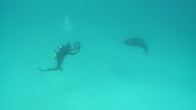 MS TS Manta ray and photographer / Hanifaru, Baa Atoll, Maldives