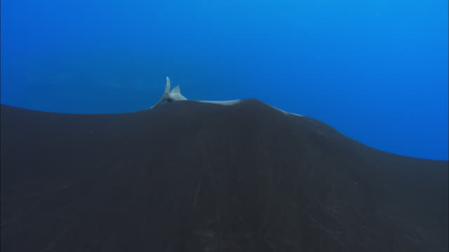 manta ray mexico  - mittelgroße tiergruppe stock-videos und b-roll-filmmaterial