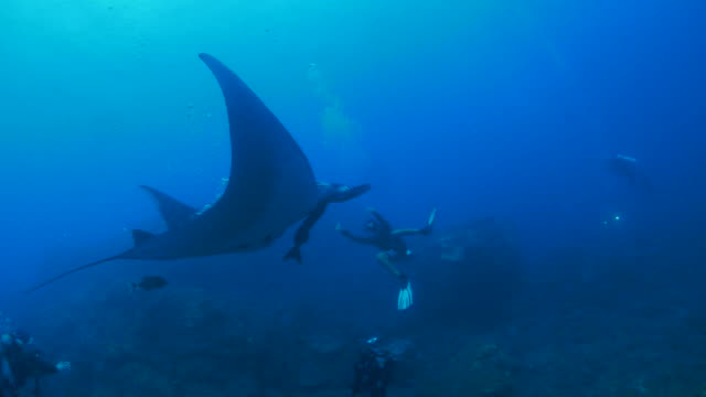 manta ray tend to close to diver by air bubble, mexico - manta ray stock videos and b-roll footage