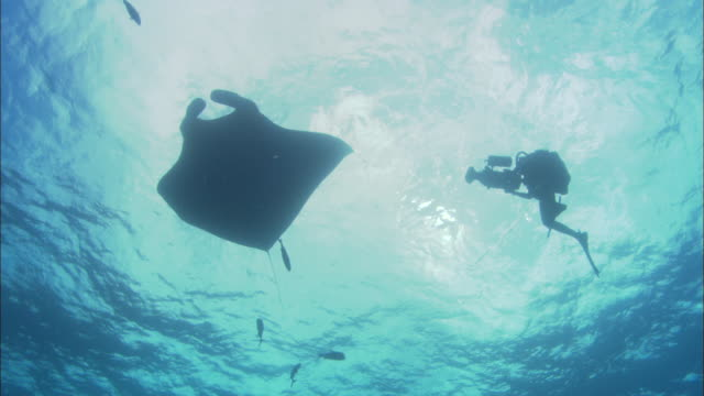 manta rays silhouette, mexico  - aqualung diving equipment stock videos & royalty-free footage