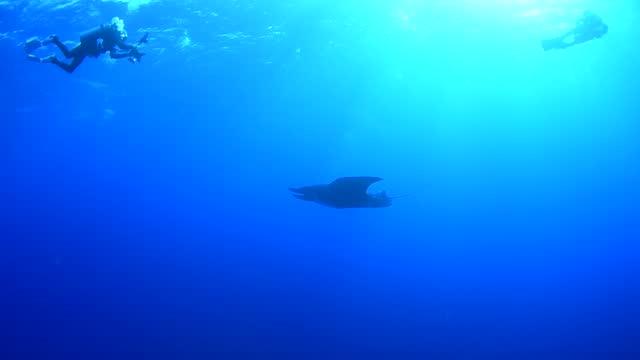 manta rays underwater in socorro, mexico - baja california peninsula stock videos & royalty-free footage