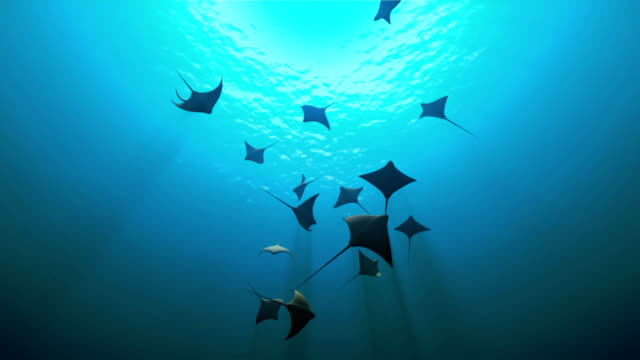 manta rays - palau stock videos & royalty-free footage