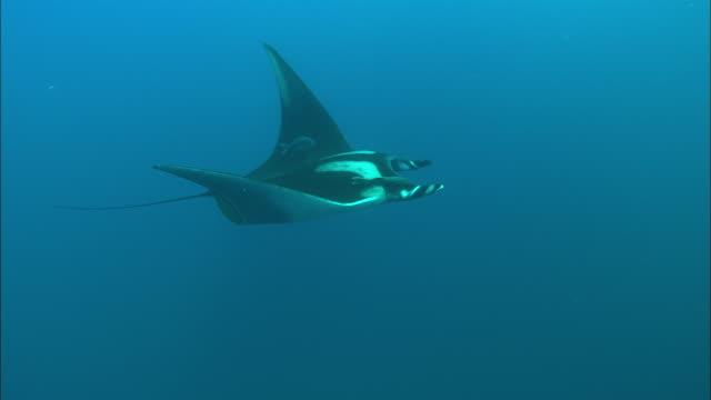 manta, solo, mexico  - 通過する点の映像素材/bロール
