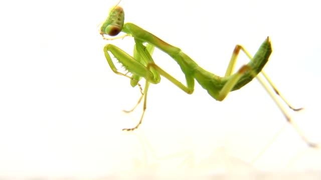 - Mantis Reinigung selbst