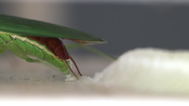 mantis life cycle - life cycle stock videos & royalty-free footage