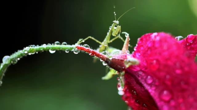 - mantis - tierisches exoskelett stock-videos und b-roll-filmmaterial