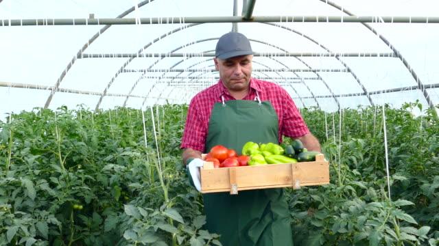 Arbeider bedrijf krat met groenten in kas