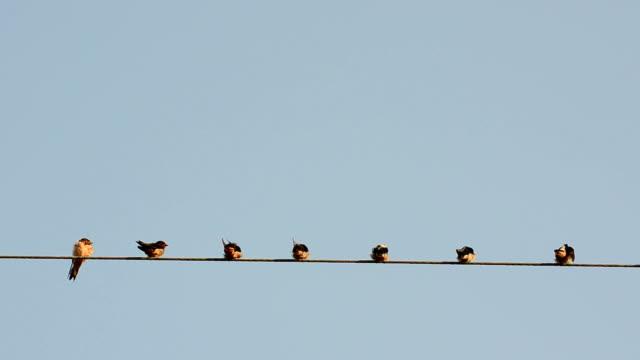 数多くの鳥がクールな感覚で、電源ケーブル - ケーブル線点の映像素材/bロール
