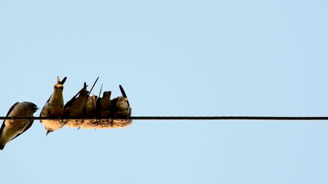 vidéos et rushes de de nombreux oiseaux se sentir au frais sur le câble électrique - cable
