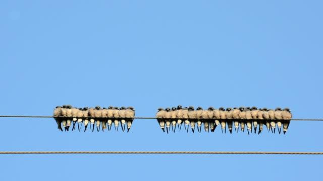 viele vögel fliegen zur wire - cable stock-videos und b-roll-filmmaterial