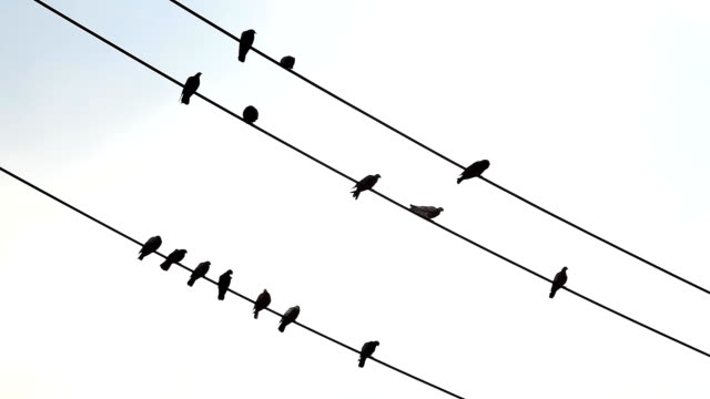many birds perched on a wire. - pole stock videos & royalty-free footage