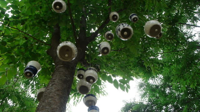 many ceramics are hanging on to branch and shot of tree canopy - tree canopy stock videos & royalty-free footage