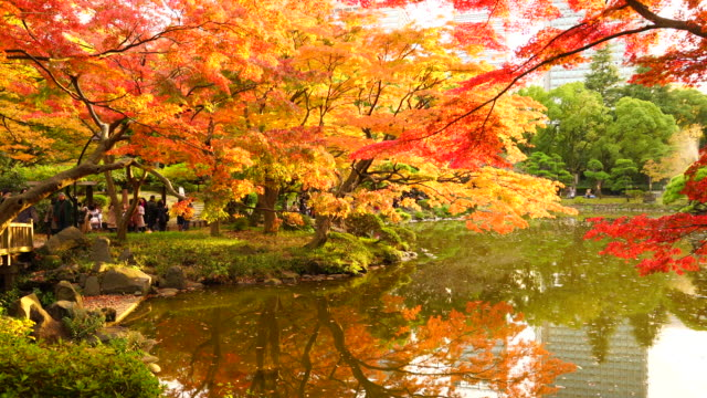 Many colorful autumns leaves trees glow and reflect to Unkei Pond in the Hibya Park at Hibiya, Chiyoda Tokyo Japan on November 25 2017.