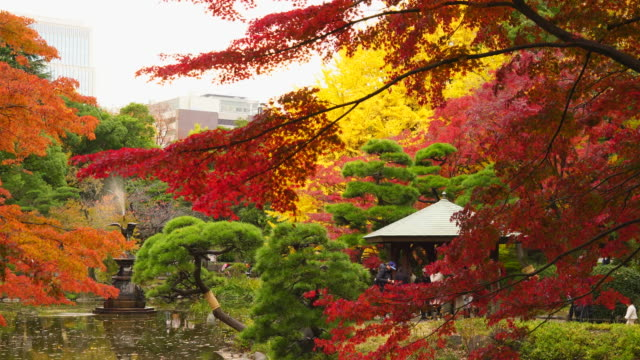 many colorful autumns leaves trees glow and surround the azumaya (literally four eaves structure) beside the unkei pond in the hibya park at hibiya, chiyoda tokyo japan on november 25 2017. - 紅葉点の映像素材/bロール